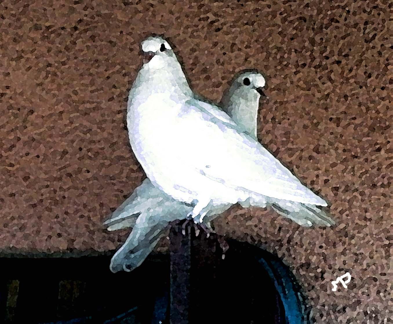 couplepigeons.jpg